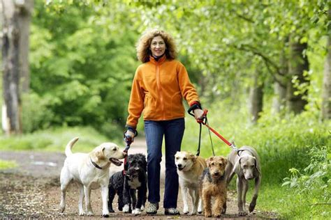 Out of Options: Finding a Professional Pet Sitter Part 1