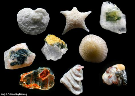 Microscopic Images Of Sand Grains Reveal A Fascinating