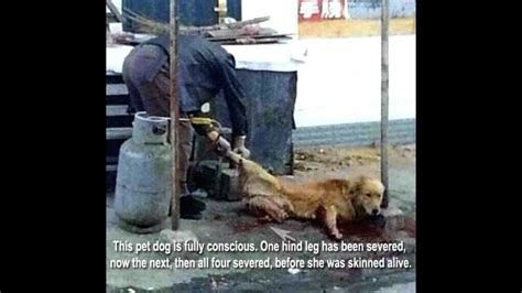 Petition · Theresa May MP: Make animal cruelty illegal in