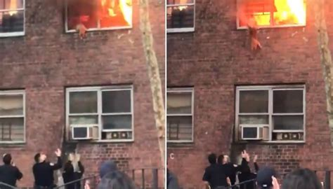 Cat jumps out of second-storey window in New York as