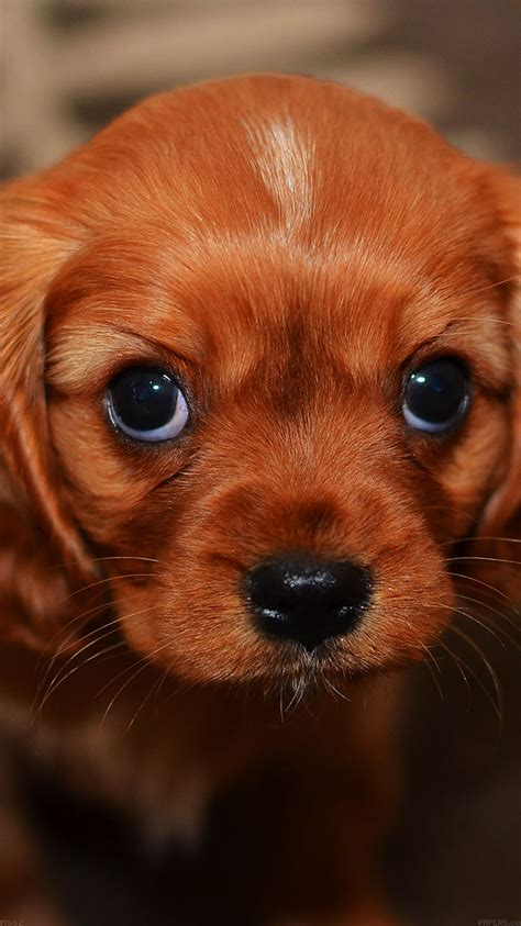 mg62-cute-puppy-wallpaper - Papers